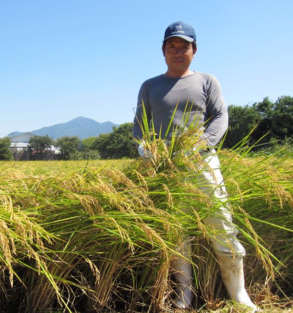 酒米の収穫